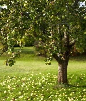10 conseils pour bien protéger un arbre