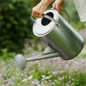 Lutter contre la sécheresse dans votre jardin
