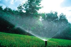 tuyau d'arrosage pour la pelouse