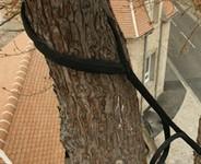 Le haubanage des arbres dangereux