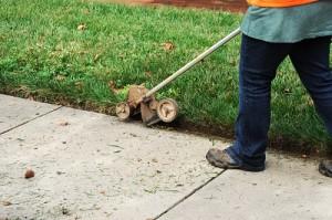 trim the lawn