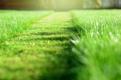 Spécial confinement : on s'occupe de la pelouse !