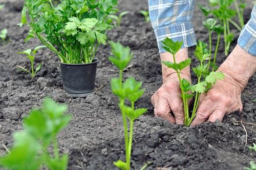 Entretenir son jardin en mai