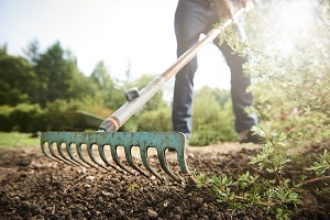 Que faire dans son jardin en août ?