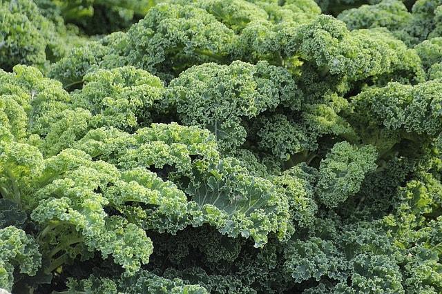 En août préparez la terre avec le motoculteur Husqvarna pour vos légumes d'hiver