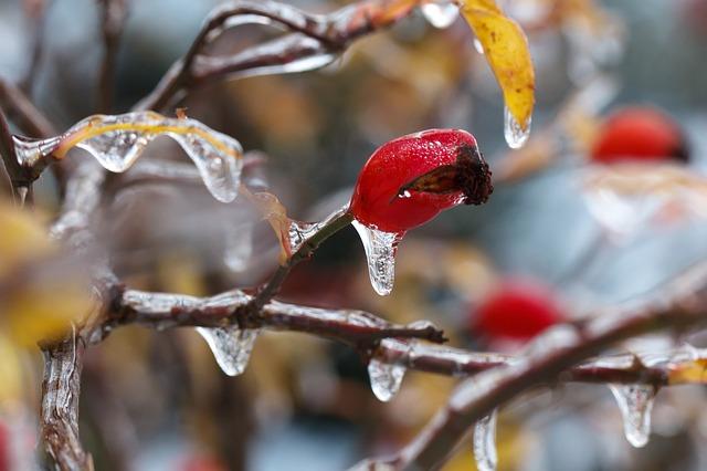 Protéger son jardin contre le froid de janvier