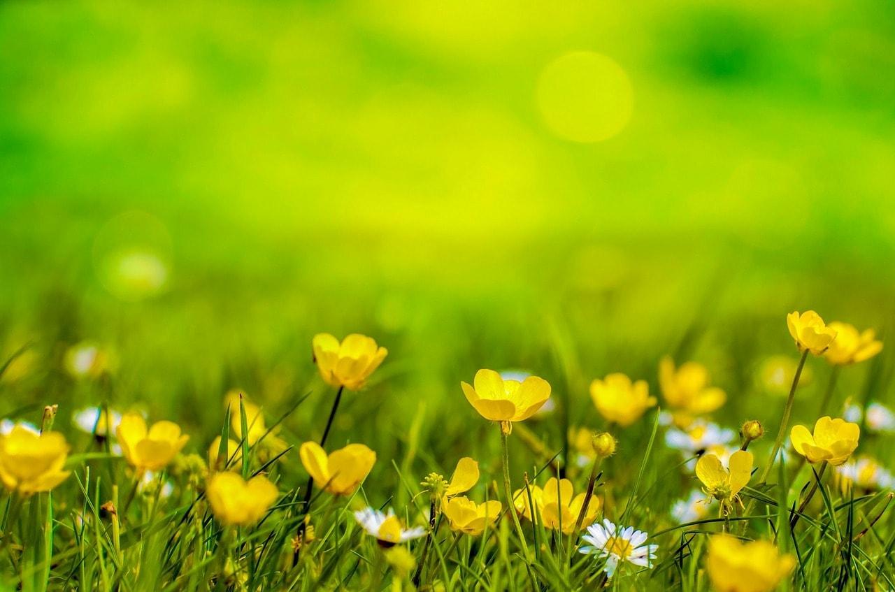 En mars, aidez votre jardin à reprendre vie