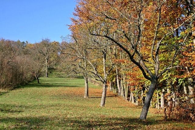 Le métier d'arboriculteur