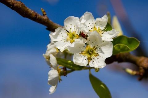 Les travaux à faire en mai dans votre jardin