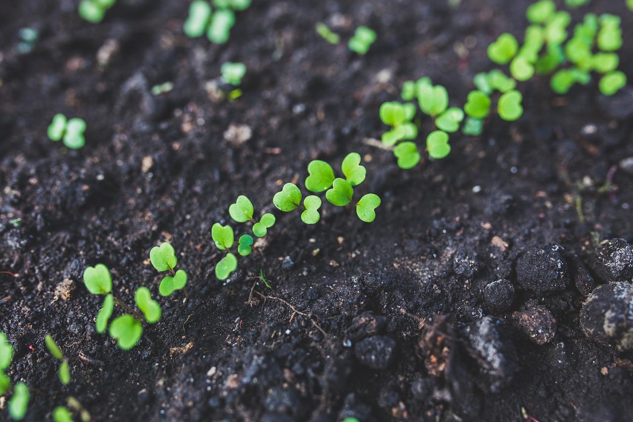 Les astuces Lambin pour jardiner autrement