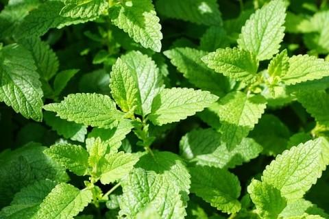 Comment cultiver les plantes et les herbes aromatiques