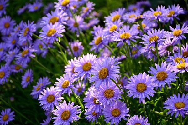 Quelles fleurs pour l'automne ?