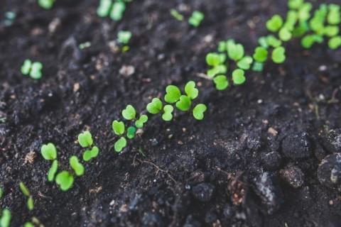 Focus métier : le chef de cultures légumières
