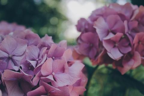 Le calendrier lunaire pour le jardin de septembre 2015