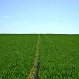 conseil agricole