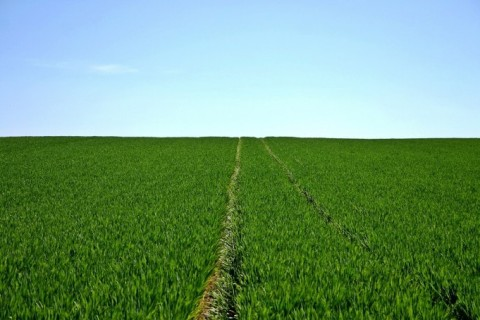 Focus métier : le métier de conseiller agricole