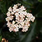 quelles fleurs planter en hiver