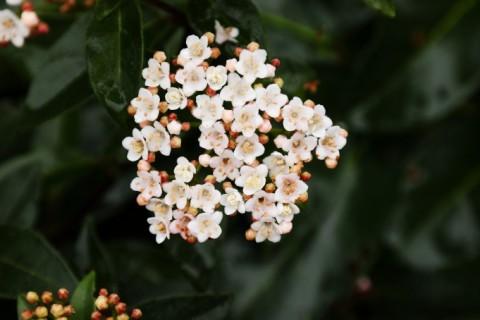 Quelles fleurs planter pour l'hiver ?