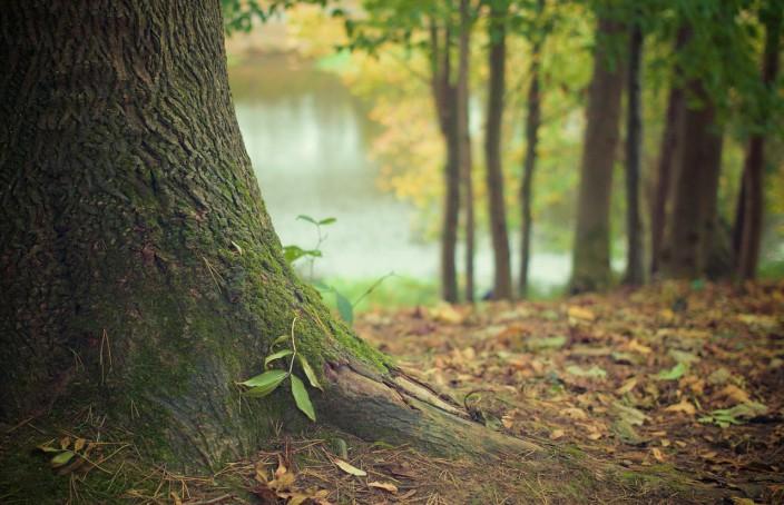 Le métier de technicien forestier