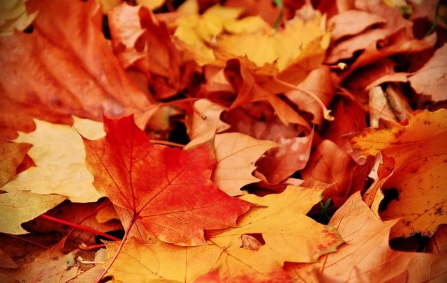 Comment entretenir ses outils à l'automne ?