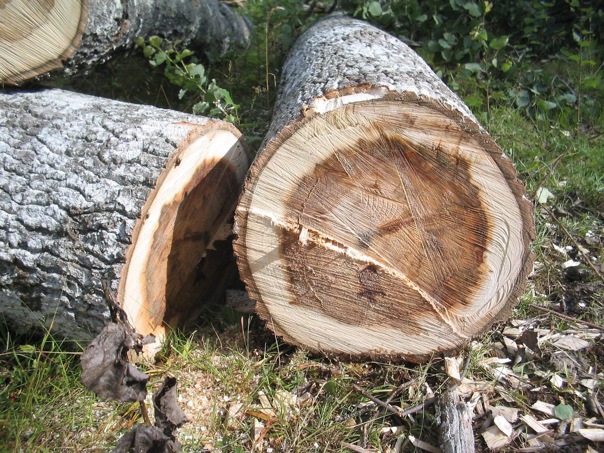 Les étapes à respecter pour réussir l'abattage d'un arbre