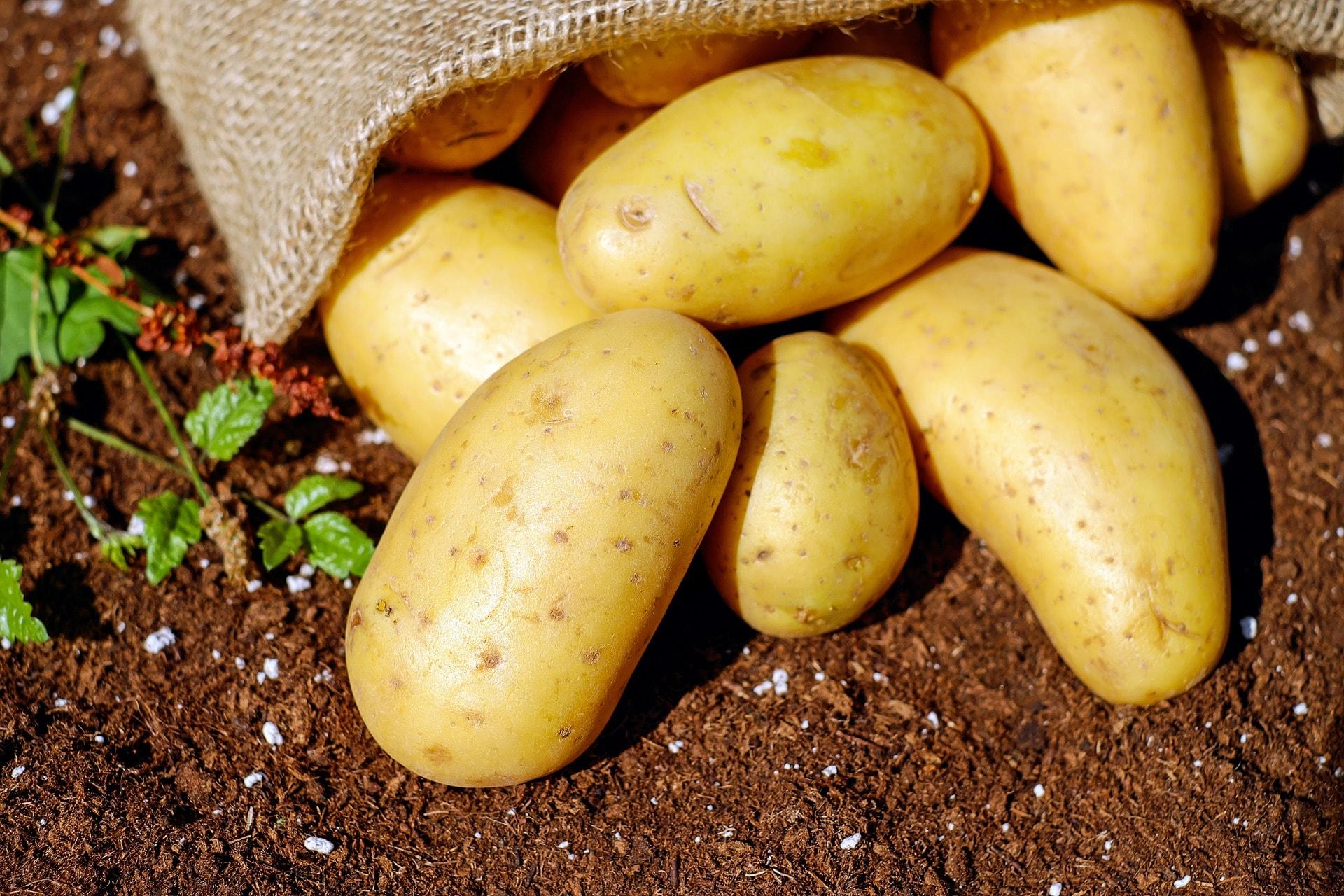 Comment rendre mon sol plus fertile ?