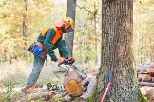 Waldarbeiter in Schutzausrüstung sägt Baumstamm mit einer Motorsäge im Wald