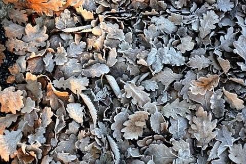 Ramassez vos feuilles mortes avec nos souffleurs électriques