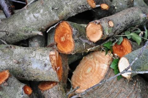Comment bien découper les branches d'un arbre