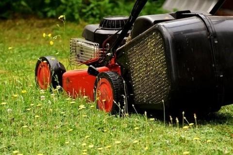 Quelles sont les meilleurs horaires pour tondre sa pelouse ?