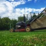 tonte de la pelouse tondeuse