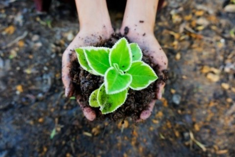 Les bons gestes à adopter pour un jardin écolo