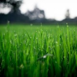 scarification pelouse