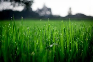 tondre sa pelouse et espace vert