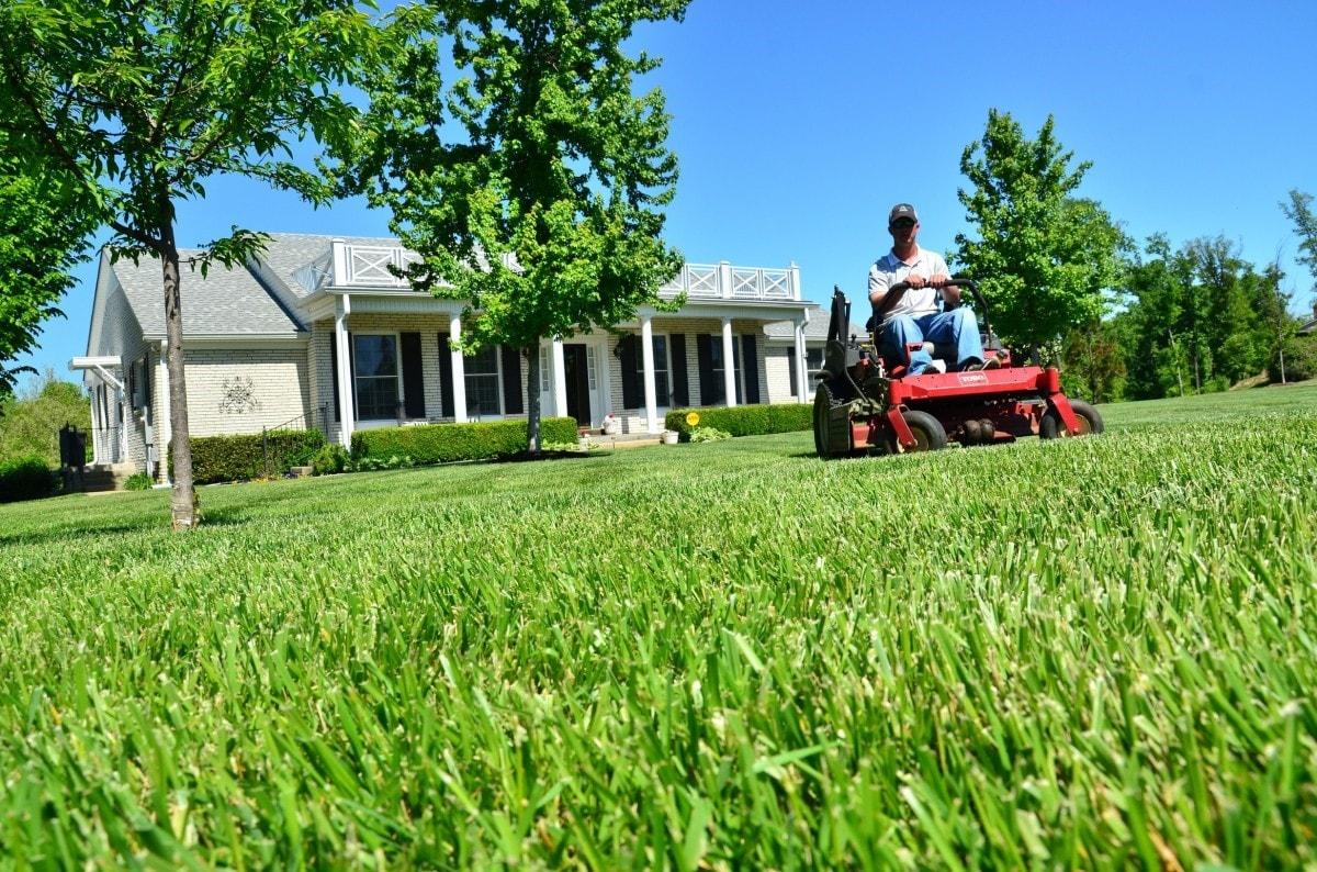 En juin, commencez les travaux d'été dans votre jardin
