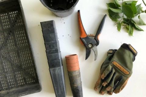 3 conseils pour un jardinage responsable