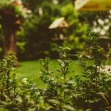 jardin-aout