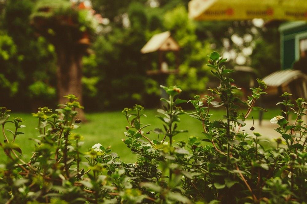 Les bonnes résolutions du jardin avant la rentrée
