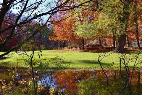 Comment entretenir son jardin en automne?