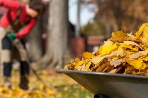 Préparer son jardin et son potager pour l'hiver en 5 étapes