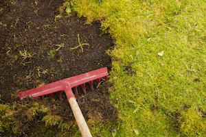 Comment chasser la mousse au jardin ?