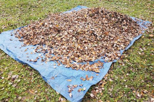 preparer-pelouse-hiver-ramassage