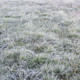 preparer-sa-pelouse-hiver