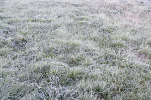 Comment préparer sa pelouse pour l'hiver ?