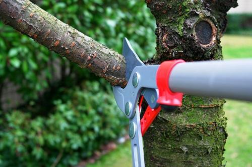 materiel-elaguer-arbre-outils