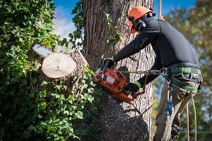 Quel matériel pour élaguer un arbre ?